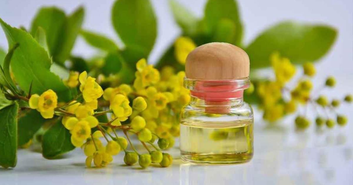 0649bf762a Ecco come usare l'olio di semi di canapa nella cosmesi e nella cura  quotidiana